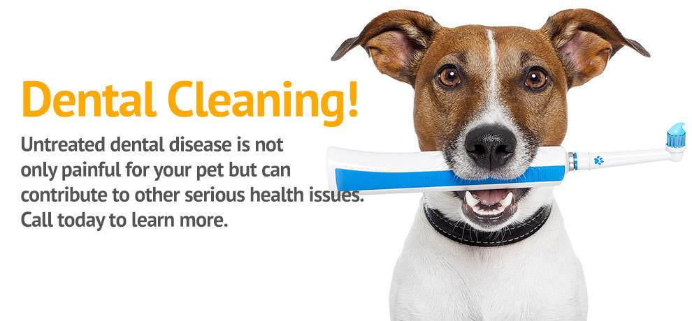 Gandy Animal Hospital - Veterinarian in Tampa, FL